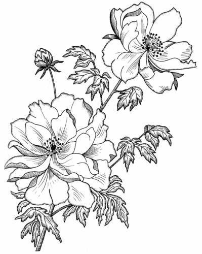 Gallery.ru / Фото #200 - ОТРИСОВКИ: ЦВЕТЫ - Vladikana...A free collection of 200 flower designs!!