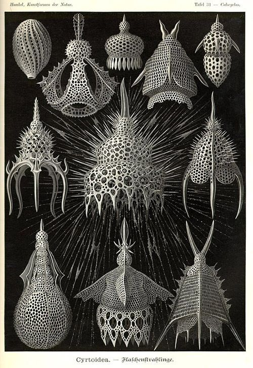 Biological illustrations from Ernst Haeckel's book 'Art Forms in Nature'.