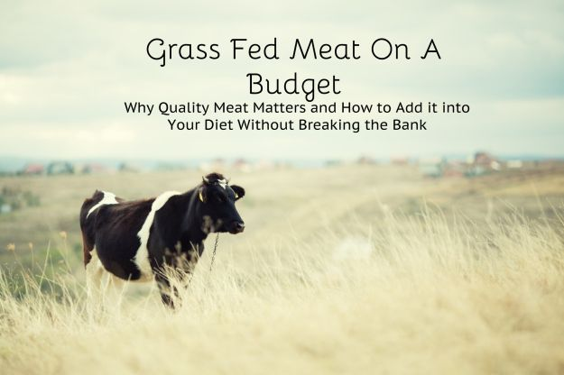 Grass Fed Meat on a Budget