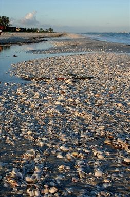 Sanibel Island. Miles of sea shells.  It is a dream come truel.  Certainly one place I would consider as a winter getaway from Alaska location to buy a home.