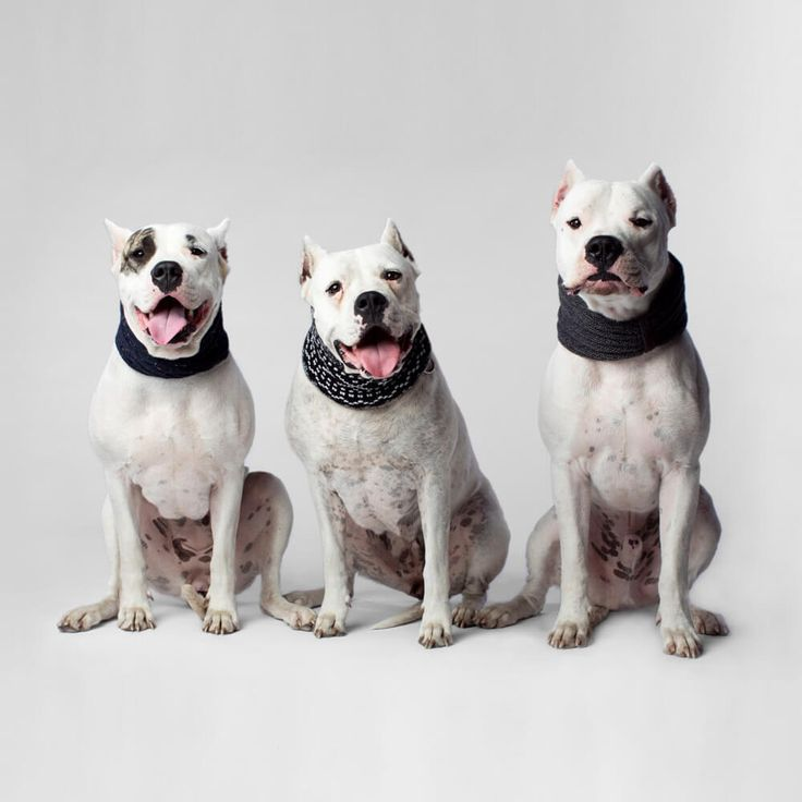 Canada Pooch Dog Scarf | Add a stylish touch to every Fall outfit with the Canada Pooch Scarf Collection