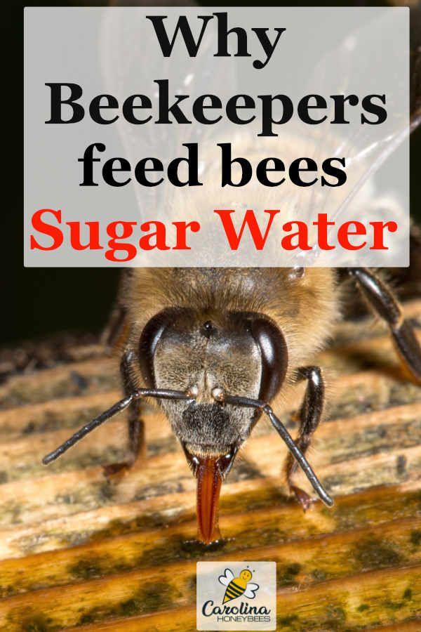 Feeding Bees Sugar Water How Why Carolina Honeybees Feeding Bees Sugar Water For Bees Bee
