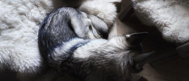 Travel with Maya - Wolfdog Maya's sweet moments