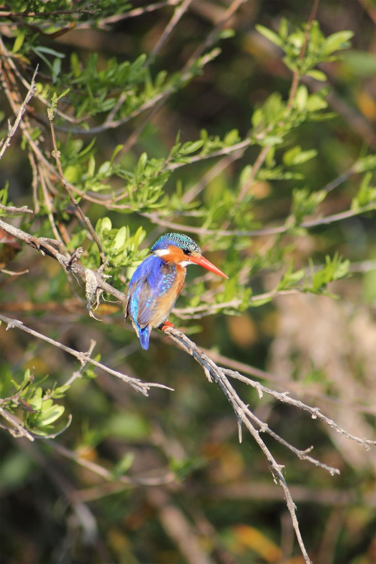 Amakhala Game Reserve has an amazing variety of bird-life.