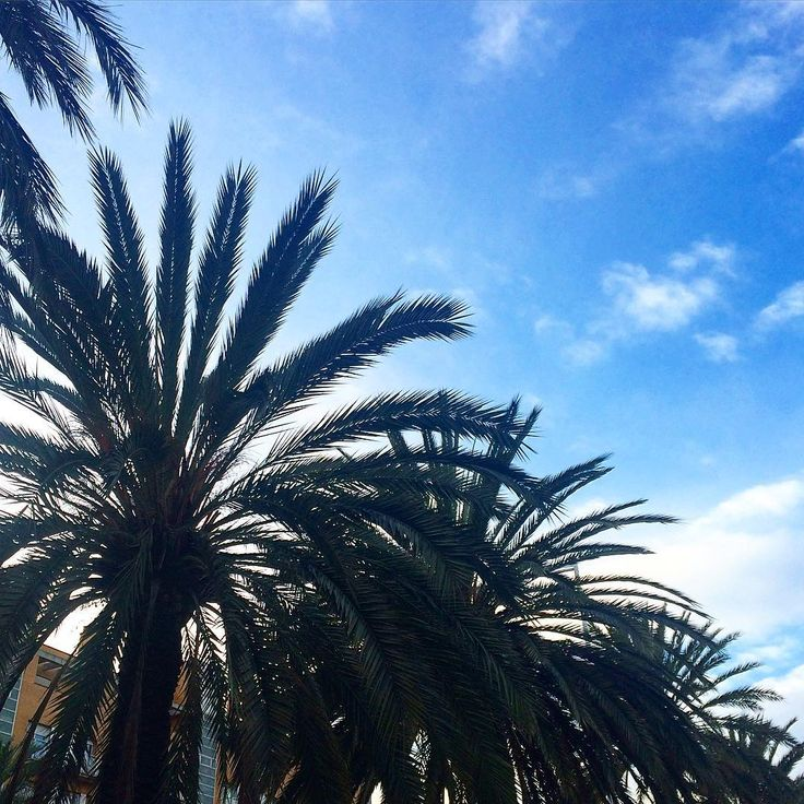 """""""Days like this make you fall in love ☀️☁️#palmtrees #bluesky #weather #breeze #barcelona #inspiration"""""""