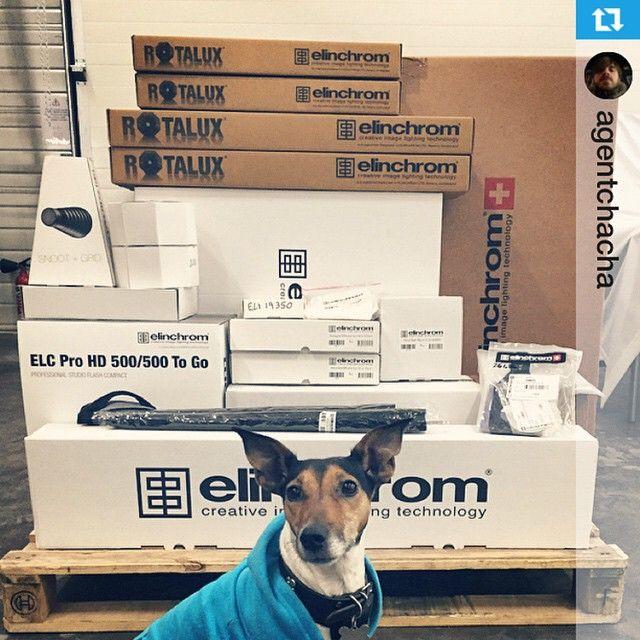 elinchrom boxes with dog