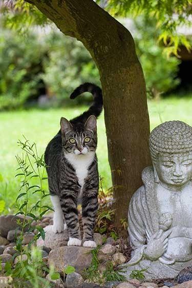 =^. .^= Zen Cat =^. .^=