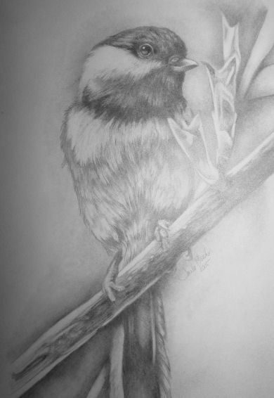 Here's a not so great photo of my doodle in graphite of Shawn Parker's Chickadee . Thanks Shawn Parker !