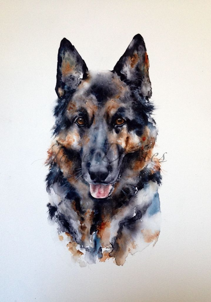 German Shepard dog painted as commission piece by watercolour artist Jane Davies