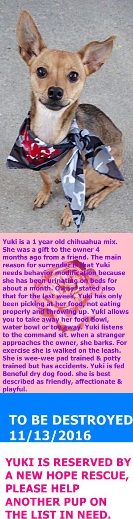SAFE 11-13-2016 by For The Love of Dog - Rottweiler Rescue of NH --- Manhattan Center  My name is YUKI. My Animal ID # is A1096284. I am a female tan and black chihuahua sh mix. The shelter thinks I am about 1 YEAR  I came in the shelter as a OWNER SUR on 11/08/2016 from NY 10468, owner surrender reason stated was PERS PROB.  http://nycdogs.urgentpodr.org/144295-2/