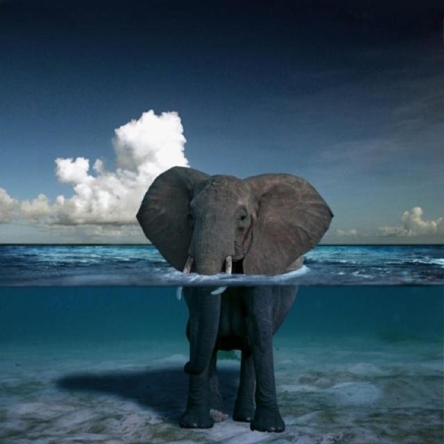 Elephant blues