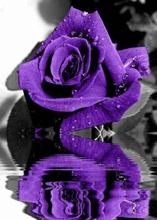 Purple stuff                                                       …                                                                                                                                                                                 More