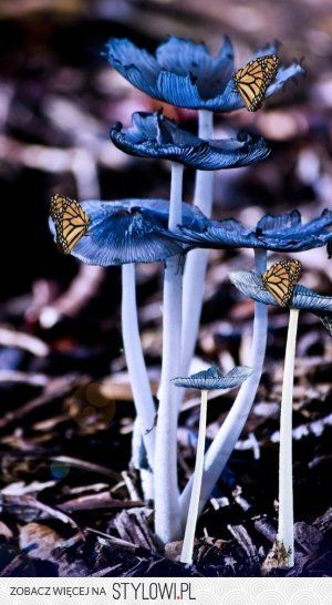 #Butterflies on #mushrooms