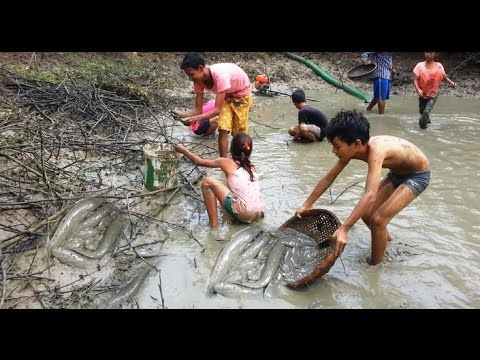 Amazing Girls Fishing, Cambodia Traditional Fishing, How to use Generato...