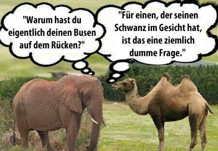 Elefant and Giraffe