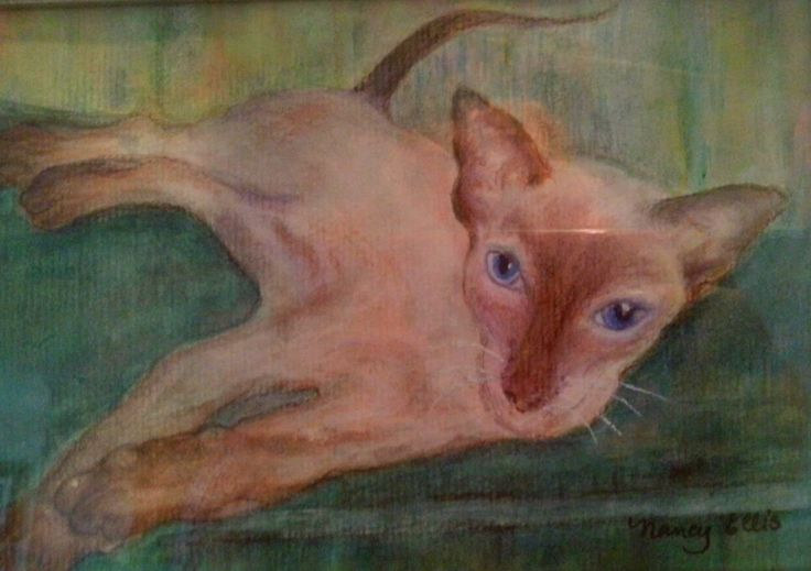 Kiki - my Sealpoint Siamese and the love of my life.  I did this picture three times to get it right. Not entered in any shows.