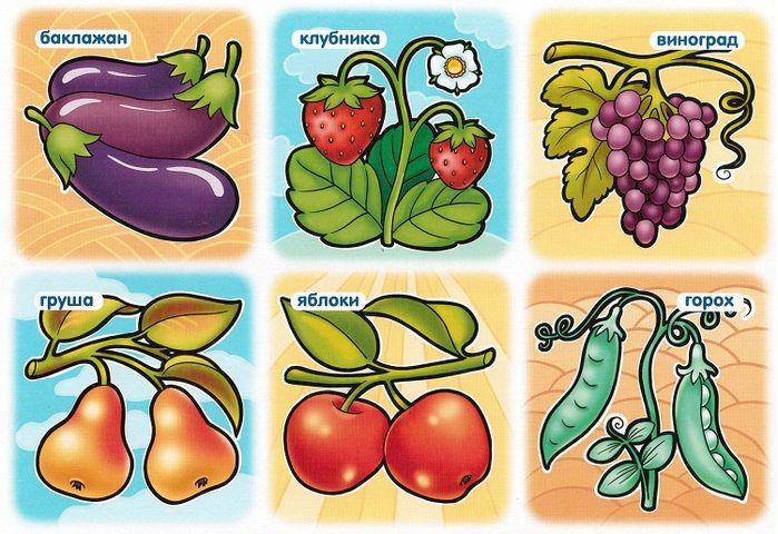 овощи картинки развивающие груди попавших кадр