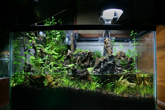 how to make a paludarium