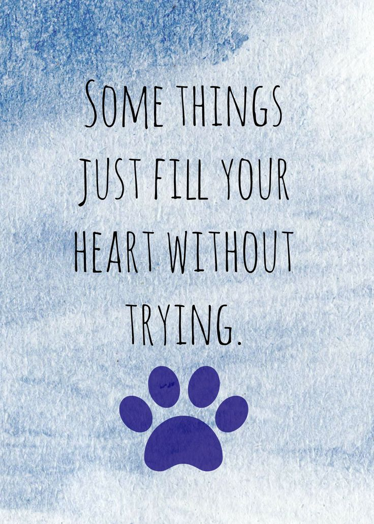 ... Dog quotes on Pinterest Puppy quotes, Dog qoutes and Sweet dog