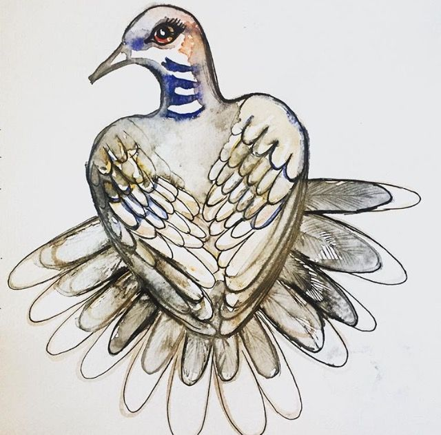 Turtle Dove sketch by Lizzie Reakes