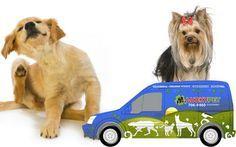 Lucky Pet | Puerto Rico pet shop, grooming, hospedaje, entrenamiento para perros y más.