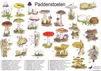 Zoekkaart paddenstoelen