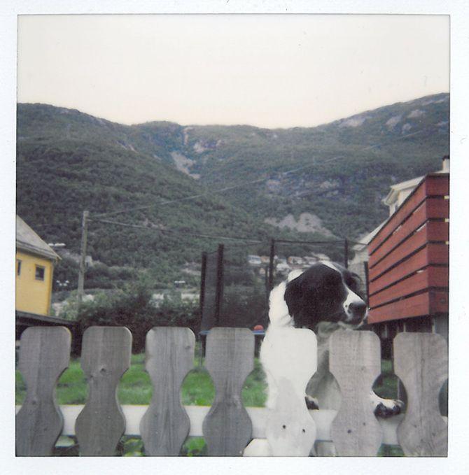Hoyanger polaroid