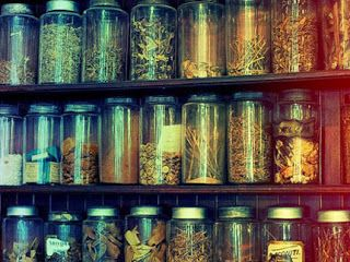 Τα παραδοσιακά βότανα δεν είναι κατάλληλα μόνο για να τα απολαμβάνουμε στο φλιτζάνι τις κρύες μέρες ή για να αρωματίζουν τα φαγητά μας, α...