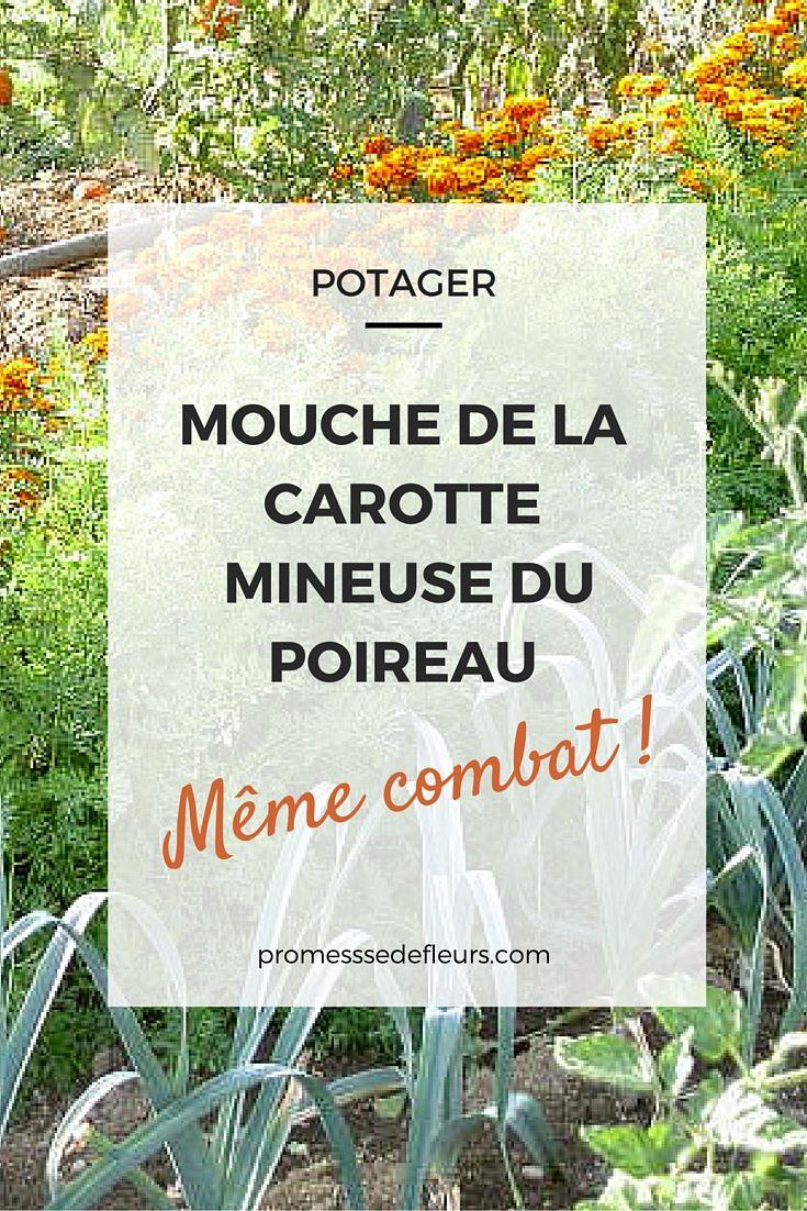 les 25 meilleures id es de la cat gorie culture des carottes sur pinterest jardinage en pots. Black Bedroom Furniture Sets. Home Design Ideas