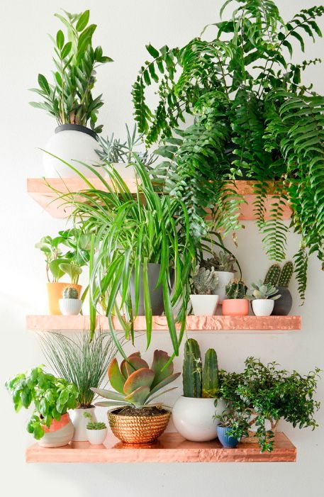 A plant shelf is a stylish way to utilise space and create impact. More decorating ideas like this at www.redonline.co.uk
