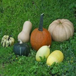 Winter squash varieties article - All recipes UK