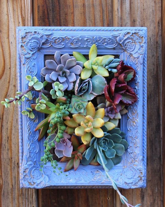 Picture Framed Succulent Vertical Garden-Ready to hang