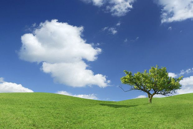 Lonely Tree - Wall Mural & Photo Wallpaper - Photowall