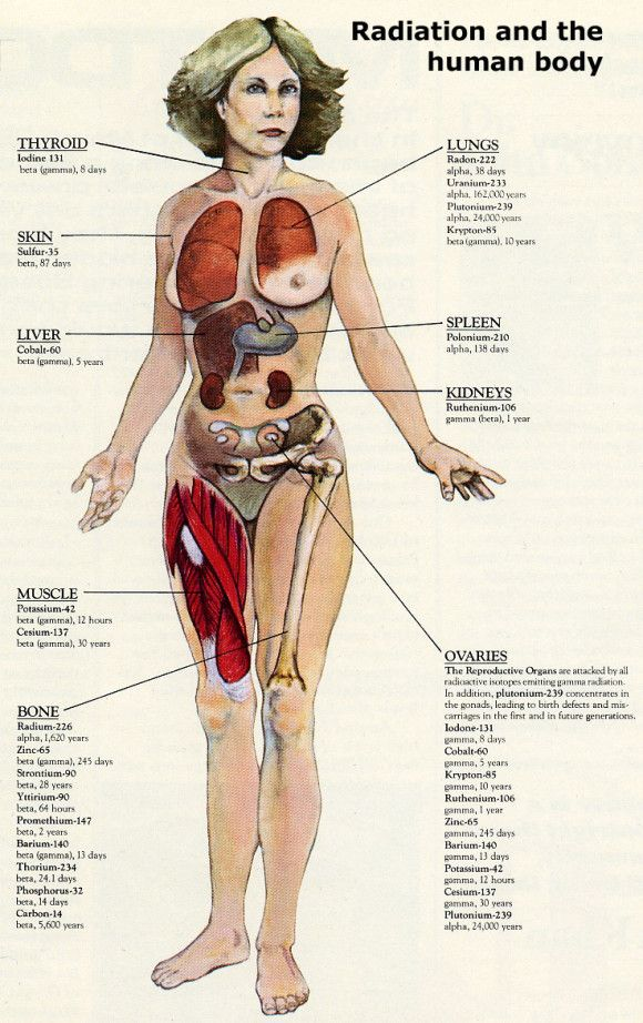 Human female body organs