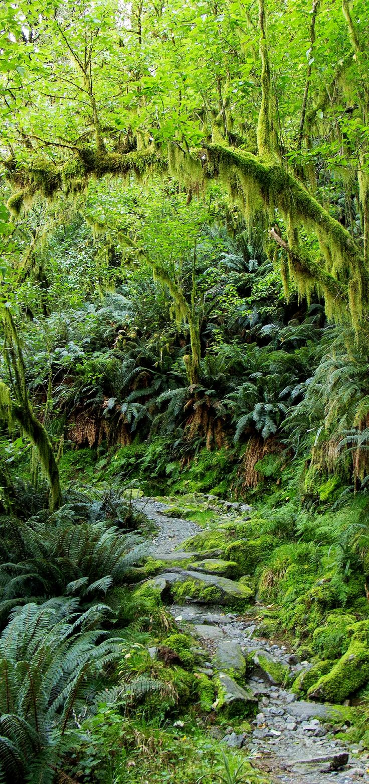 Rain Forest, MIlford Track, New Zealand
