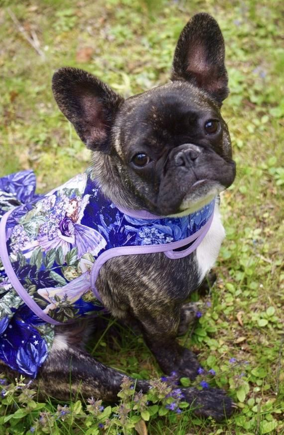 Garden Fairy Ruffle Dog Harness Made In Usa Dog Dress Dog
