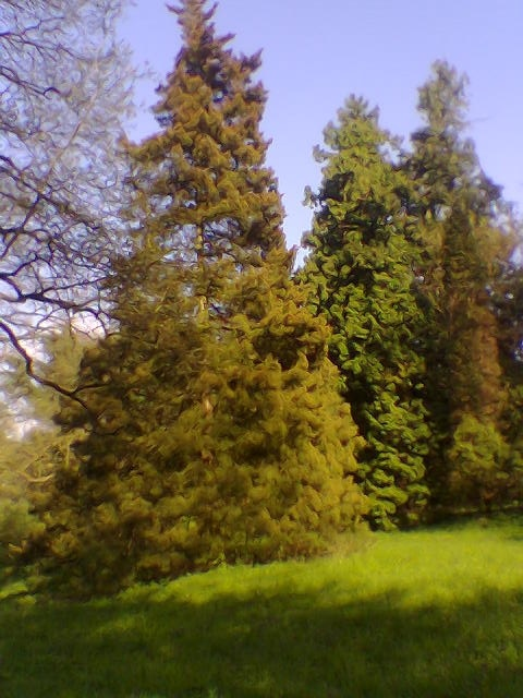 Parcul denrologic Simeria
