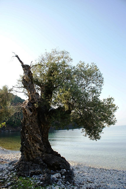 Standing still while time passes...  http://www.cycladia.com/blog/tourism-insight/pelion-the-mythical-mountainscape