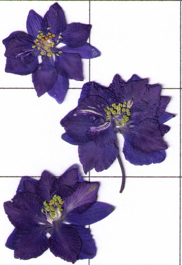 Upper left larkspur July Birth flowers, Birth flower