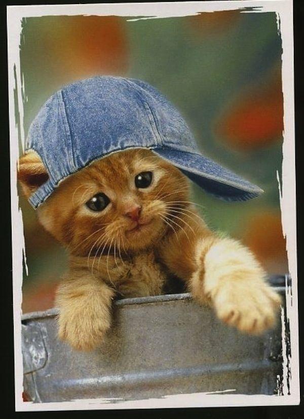 Картинки прикольные коты в кепках