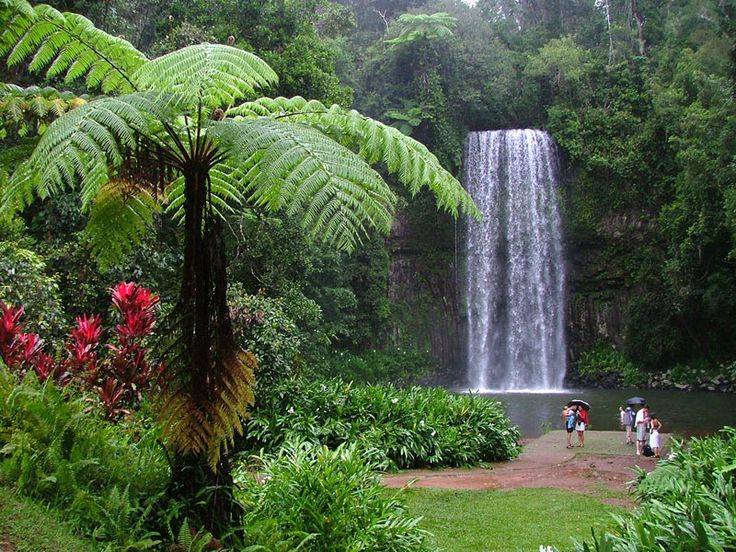 Millaa Millaa Falls are adjacent to the town of Millaa Millaa, on the Atherton Tableland in Far North Queensland, Australia. Millaa Millaa is an Aboriginal word meaning plenty of water or waterfall.