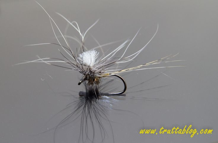 A Para RAB for small streams: The halo hackle done South African style with squirel tail