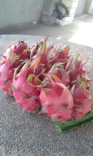 Dragonfruit  From my mother \^^/