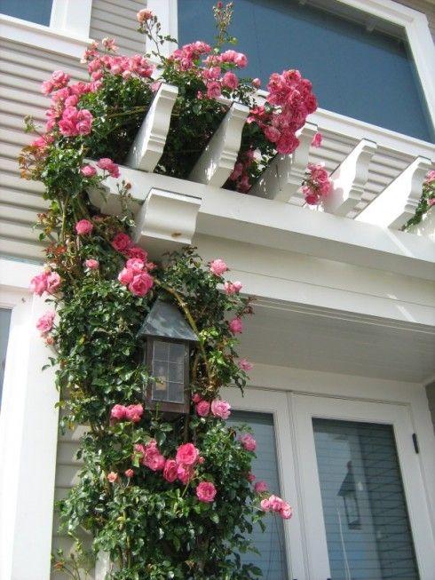 Climbing roses gardening landscaping pinterest - Climbing rose trellis ...