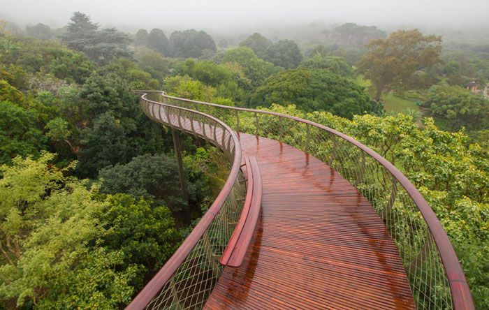 We walk through the new Boomslang treetop forest walkway within Cape Town's Kirstenbosch Botanical Gardens.