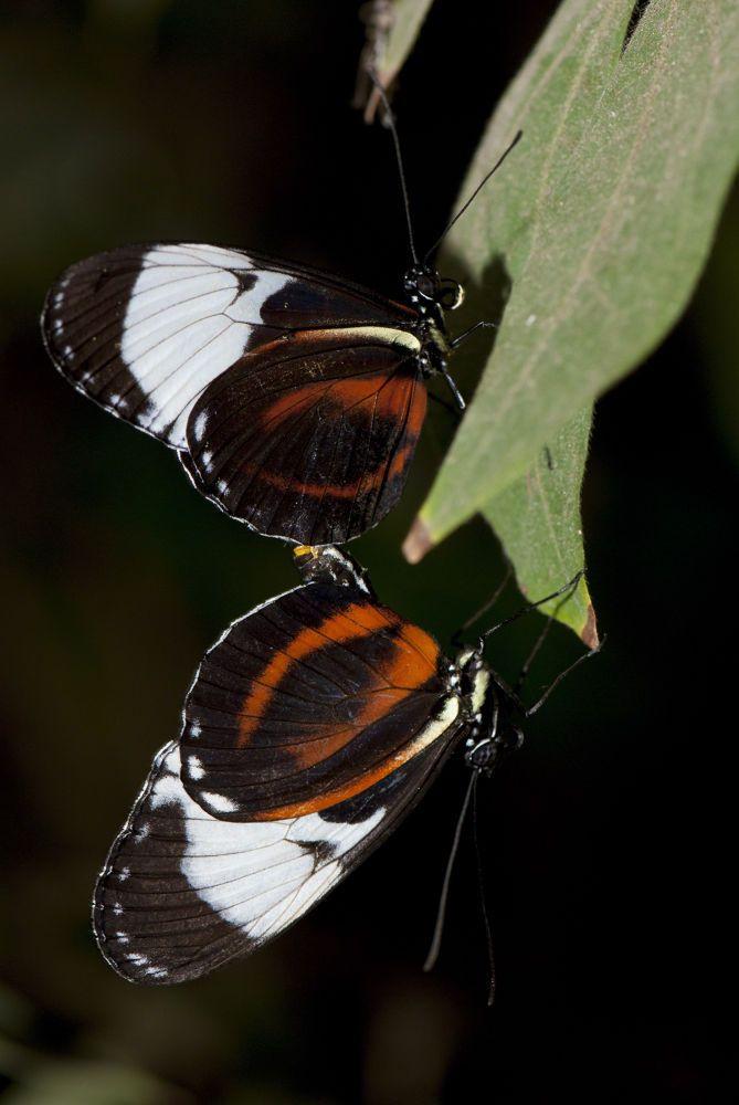 Butterflies by cliffordpugliese