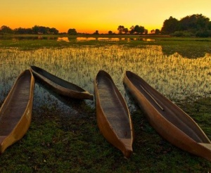 Botswana canoes at sunset.  Botswana is in Southern Africa, is flat, and up to 70% is covered by the Kalahari Desert.  It is one of the most sparsely populated countries in the world.  Go to www.YourTravelVideos.com or just click on photo for home videos and much more on sites like this.