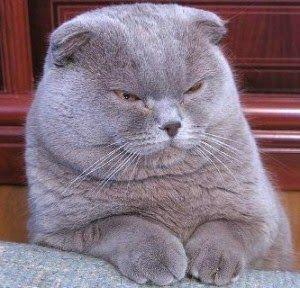 Jenis-Jenis Ras Kucing Lucu di Dunia Beserta Foto-Foto Cantiknya | Japanindo Cute Culture