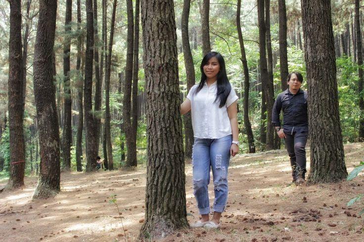 Hutan Pinus Gunung Pancar