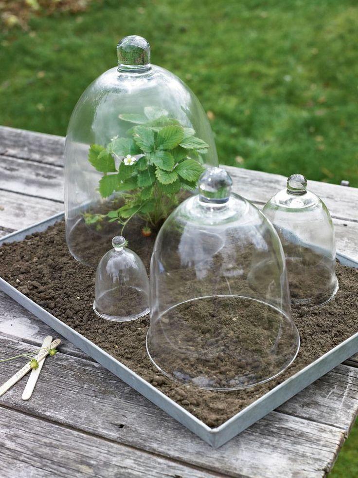 garden cloche ideas